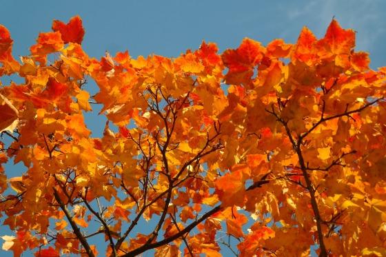 fall-foliage-228165_1920